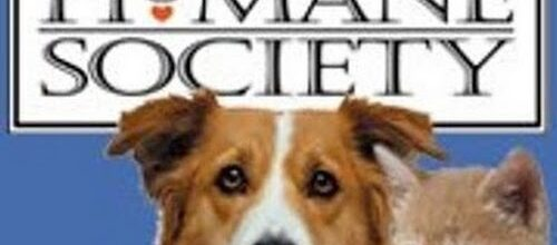 Podcast 1702 Man's Best Friend and Answering Mail